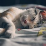 cat sleeping - animal care